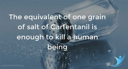 Carfentanil.jpg