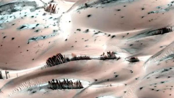 Mars_trees.jpg