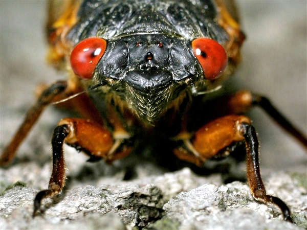 cicada-creepy-photo1.jpg