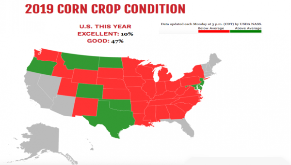 corn_crop_conditions.png
