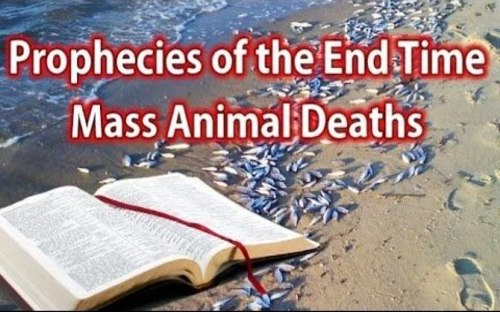 end_times_prophecy_mass_deaths.jpg