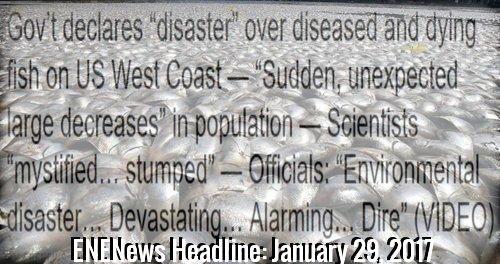 enenews_headline.jpg