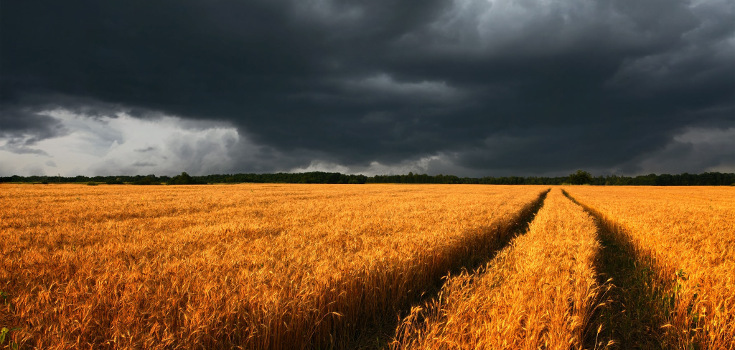 field_wheat_dark_735_350.jpg