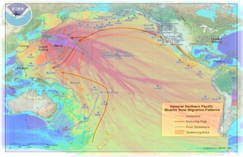 fukushima_tuna_migration_patterns.jpg