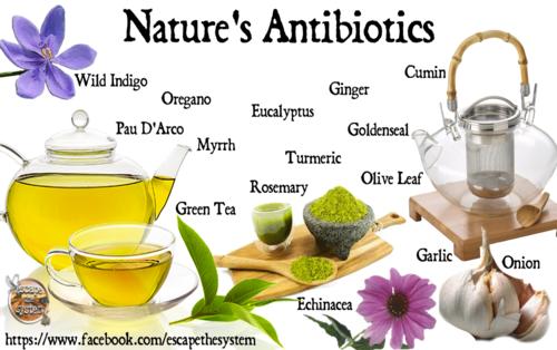 natures_antibiotics.png