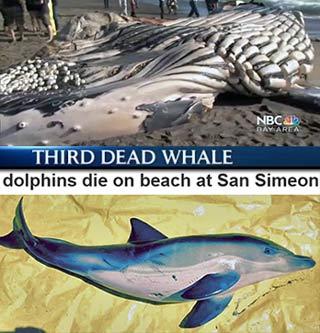 whale_dolph.jpg