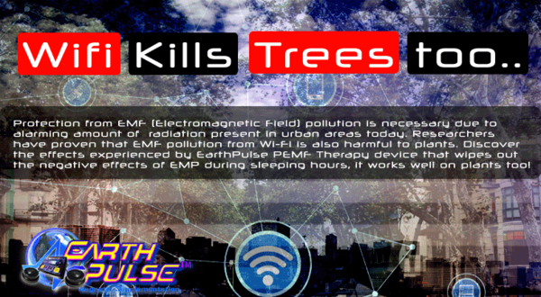 wifi_kills_trees.png